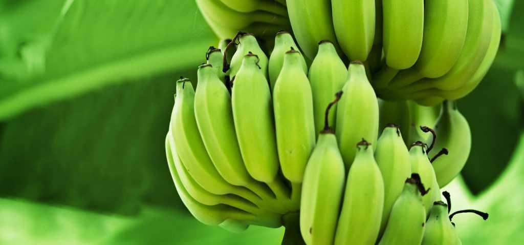 8-Amazing-Benefits-And-Uses-Of-Green-Bananas