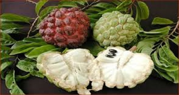 this-one-fruit-kills-malignant-cells-of-12-different-types-of-cancer