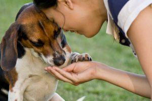 woman-feeding-dog-snack