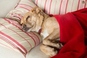 aspirin-poisoning-in-dogs-554f6fcd8b1b5
