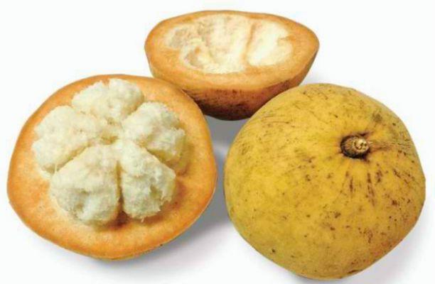 santol-fruit၁