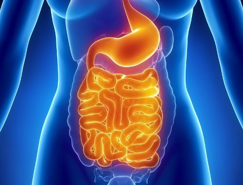Digestive-system-intestinal-flora