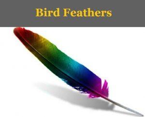 birdfeathers