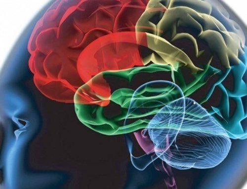 ဘယ်လိုအရာတွေက သင့်ဦးနှောက်ကို ထိခိုက်ပျက်စီးစေသလဲဆိုတာ